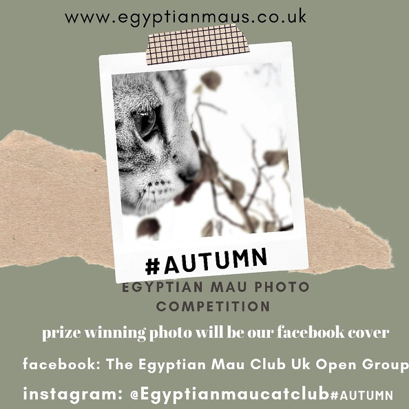 Autumn 2019 Photo competition