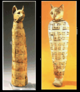 Photograph of cat mummies