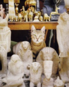 Modern history of Egypt and the Egyptian Mau