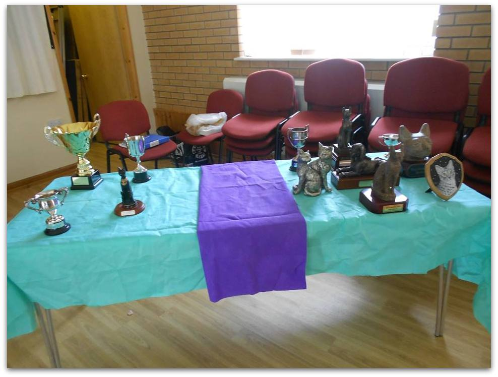 Photo of Egyptian Mau Club Trophies